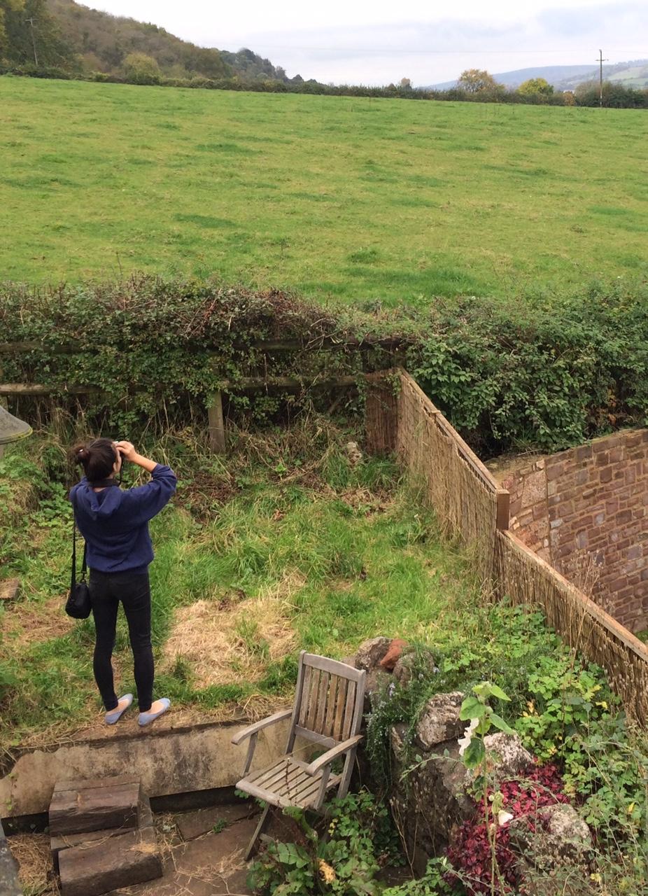 White-tailed Eagle – An incredible Garden Bird