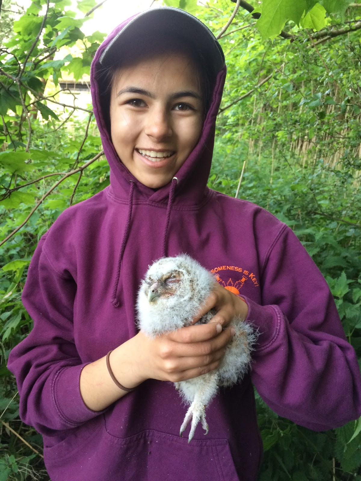 Ringing a Tawny Owl Pulli (Chick) on 11 May 2017