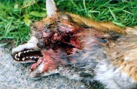 Vote NO to Conservatives bringing back barbaric hunting with dogs
