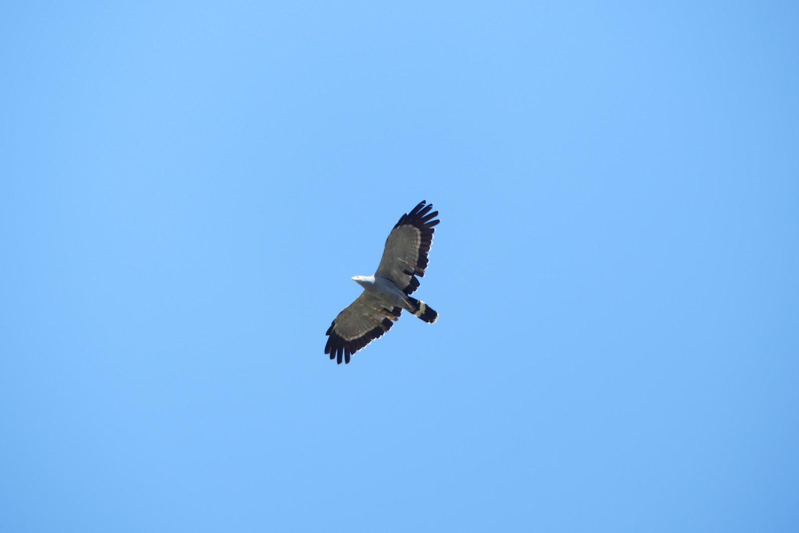 Birding in Tanzania Blog – Days 20-23