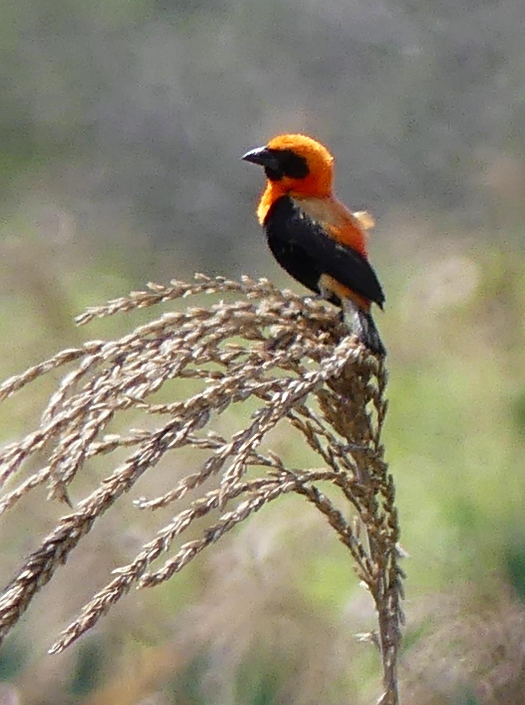 Birding in Tanzania  Blog – Days 16 – 19