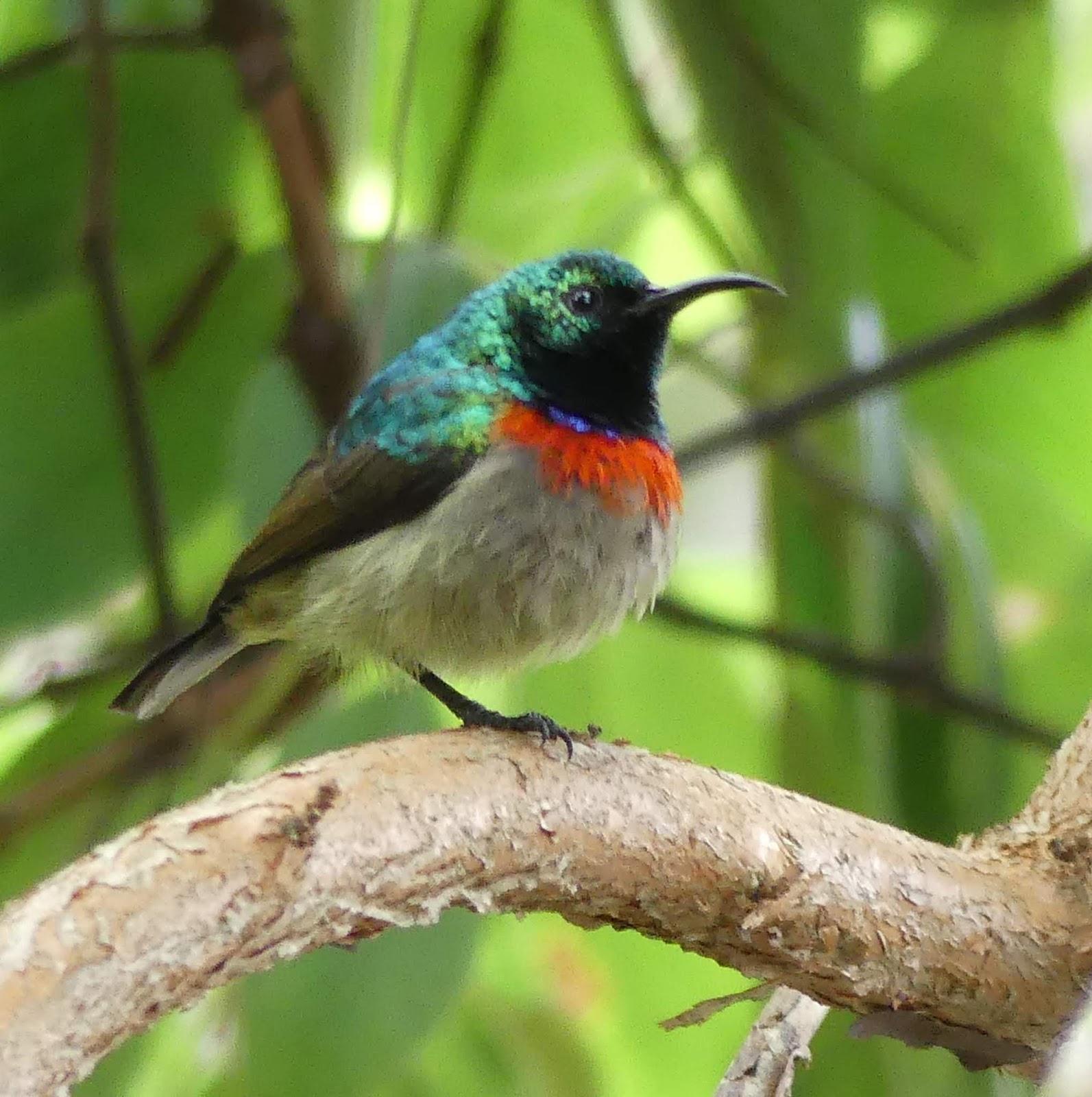 Birding in Tanzania Blog – Days 12 – 15